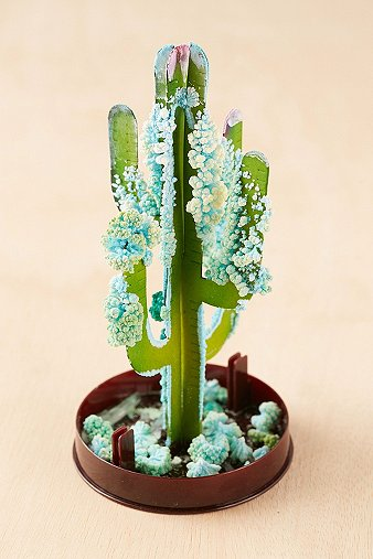diy-crystal-saguaro-cactus-grow-kit