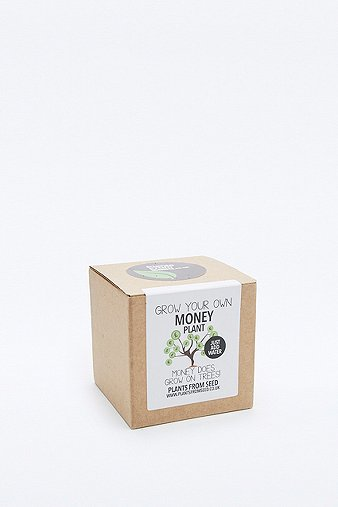 grow-your-own-money-plant-kit