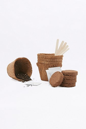 grow-your-own-cacti-kit