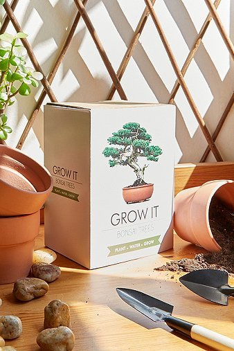 urban-grow-bonsai-tree-kit