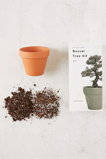 miniature-indoor-bonsai-pine-tree-grow-kit