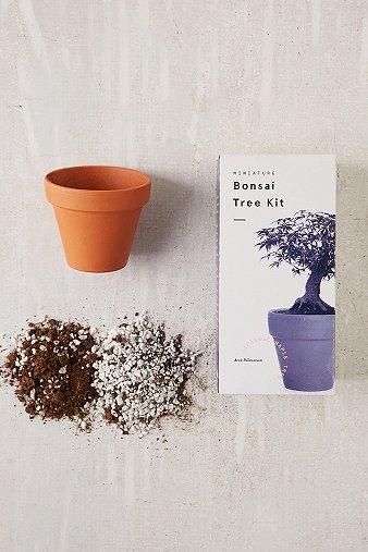 miniature-indoor-bonsai-maple-tree-grow-kit