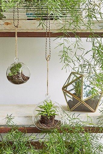 Image du produit Petit terrarium en verre