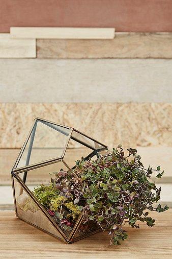 urban-grow-gold-diamond-terrarium-planter
