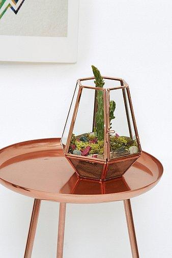Image du produit Terrarium moyen ouvert